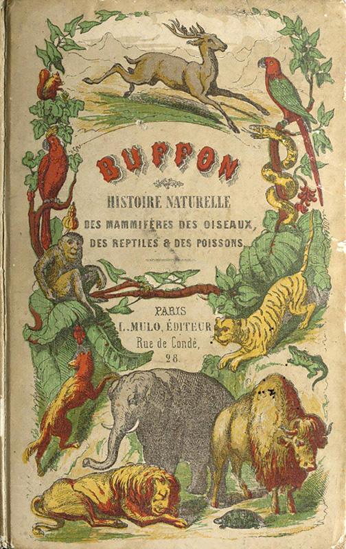 Buffon de la jeunesse : histoire naturelle des mammifères, des oiseaux, des reptiles et des poissons (2e édition) Peltier et Mulo éditeurs (Paris) 1864 © bnf.fr